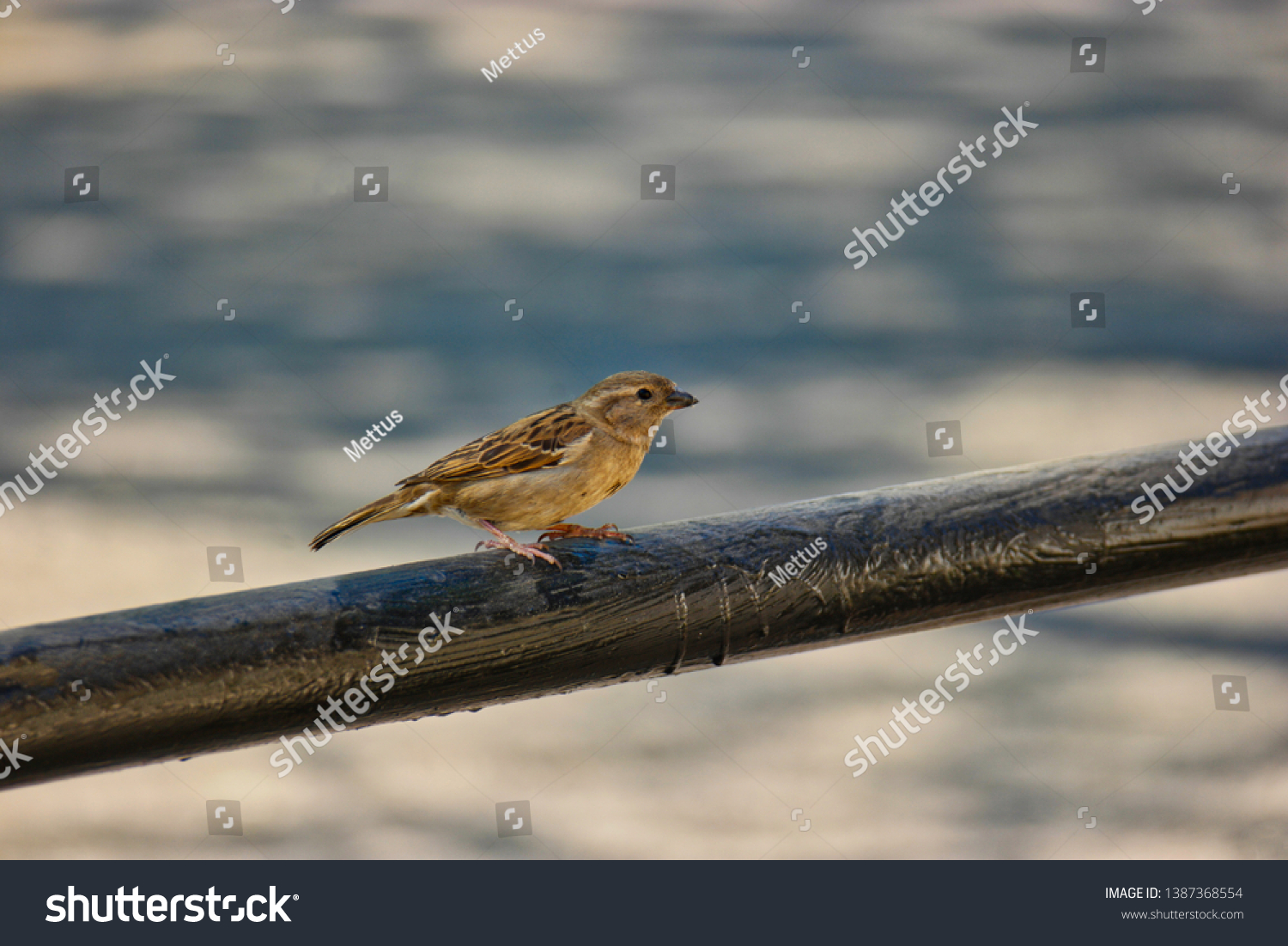 stock-photo-small-sparrow-is-sitting-on-