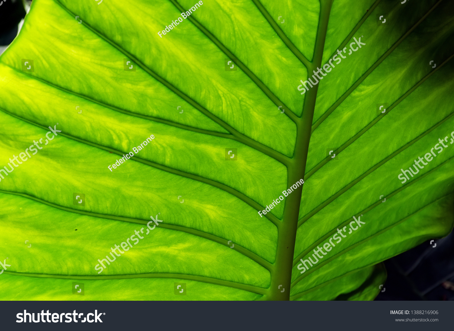 stock-photo-close-up-of-a-beautiful-and-