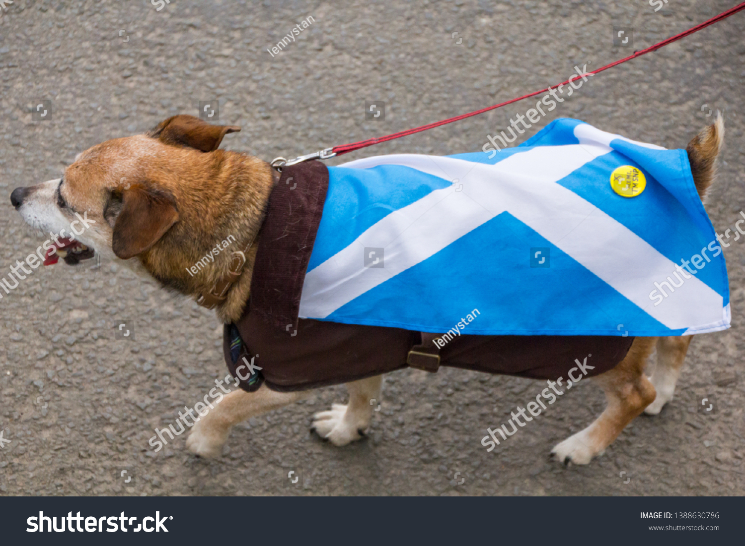 Glagow, Scotland - 04 May 2019: Dog Dressed in Scottish Flag, Indyref 2 Support
