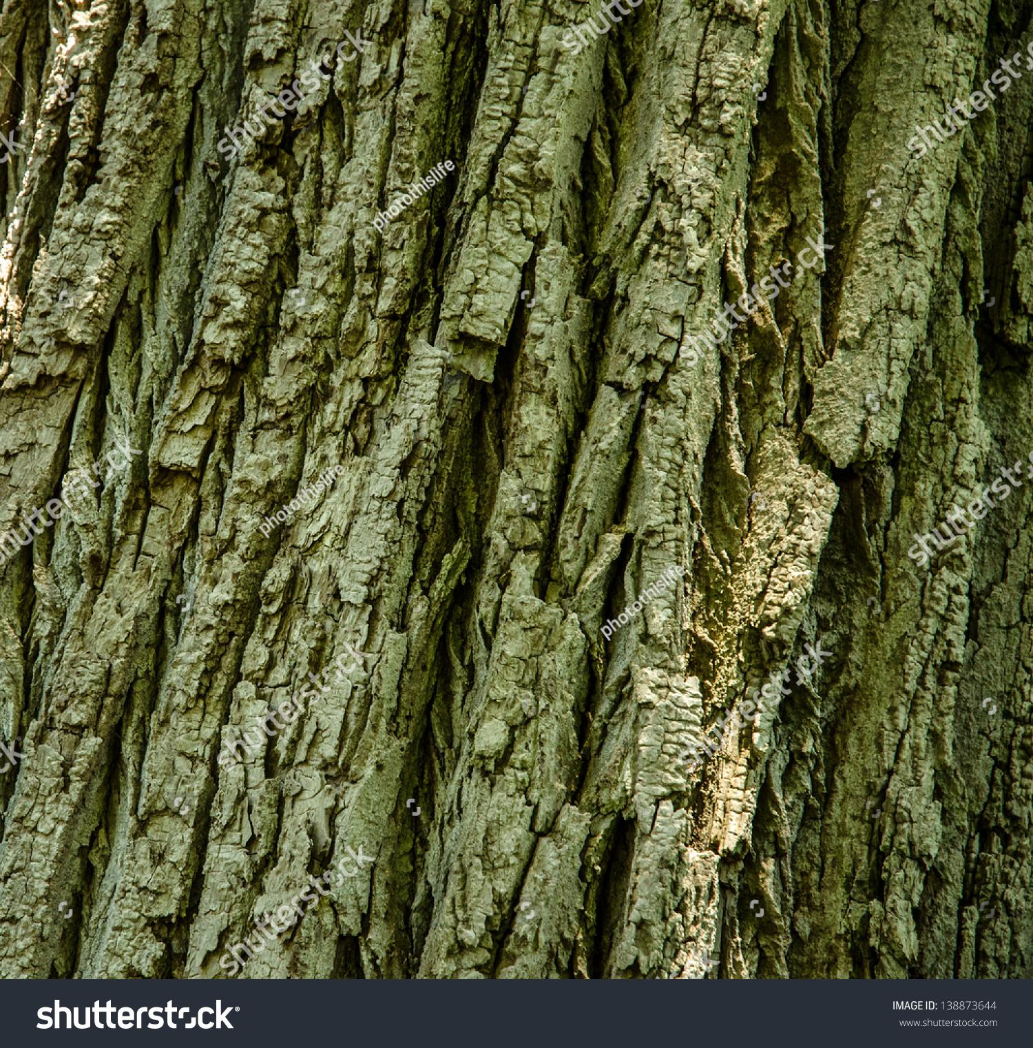 Close Maple Tree Bark Stock Photo (Royalty Free) 138873644 ...