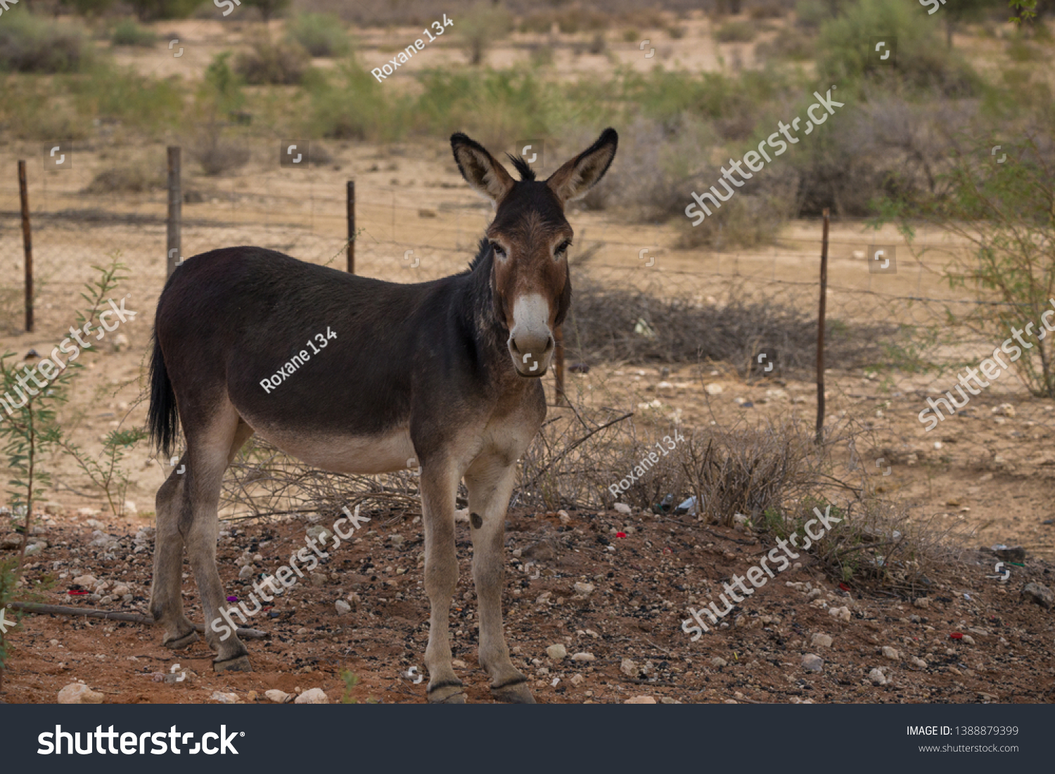 stock-photo-close-up-isolated-donkey-por