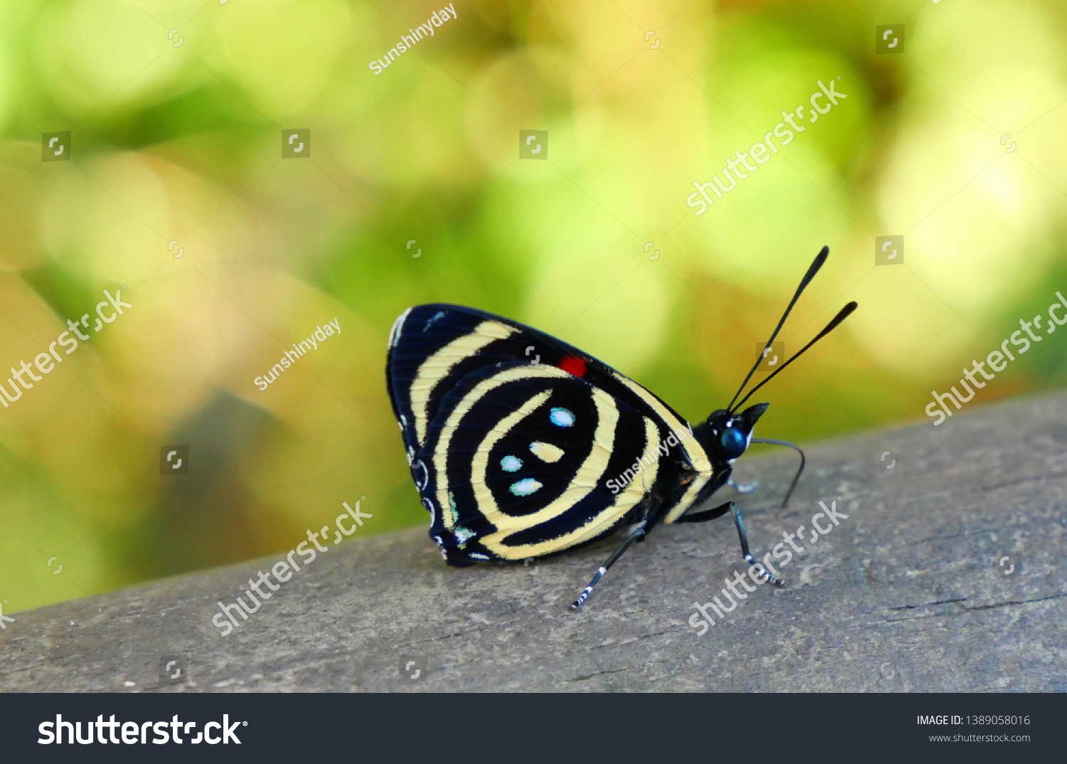 stock-photo-colorful-tropical-butterflie