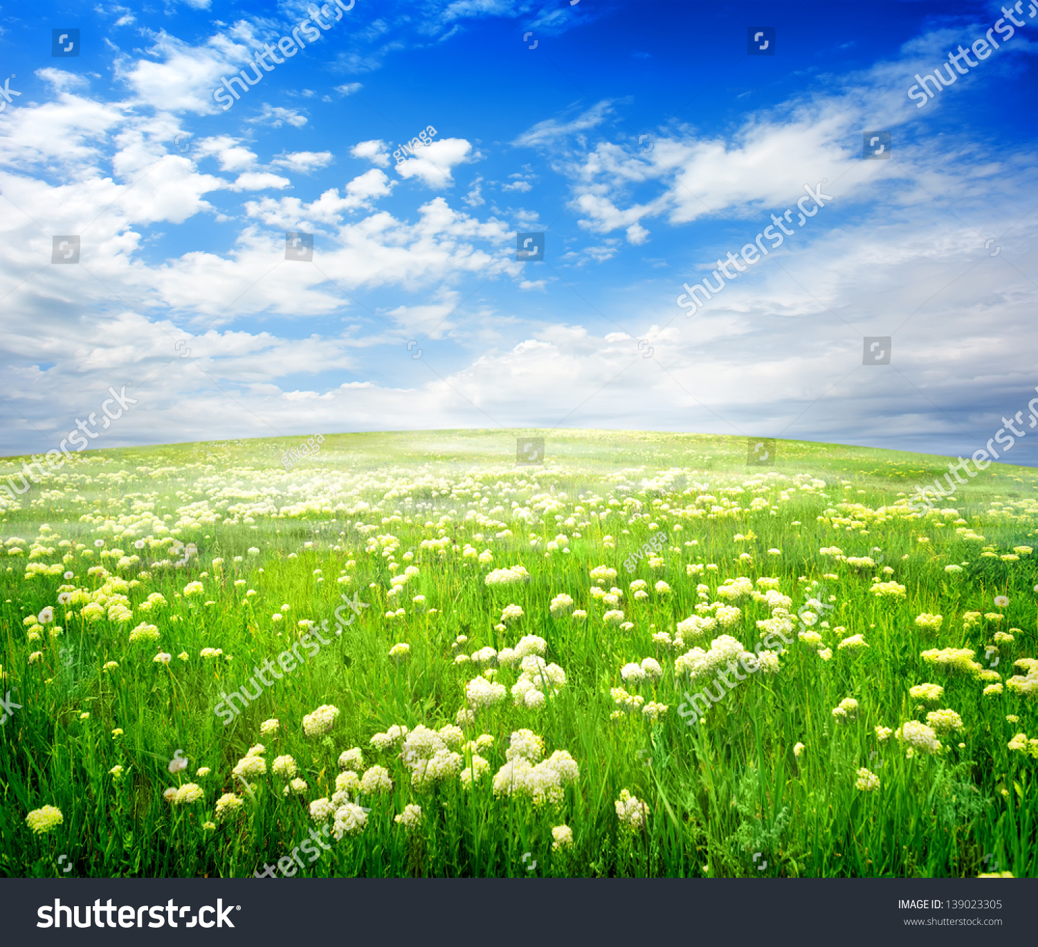 Field Of White Flowers On A Sunny Day Ez Canvas