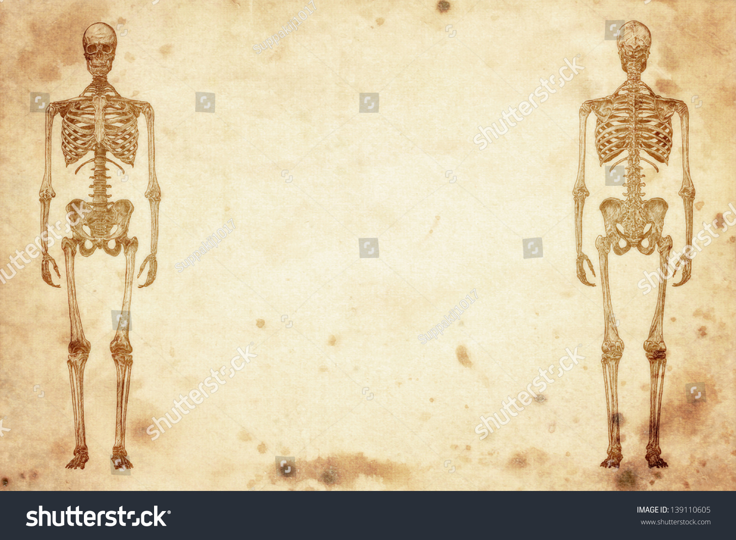 Royalty Free Stock Illustration Of Cursory Drawing Human Skeleton On