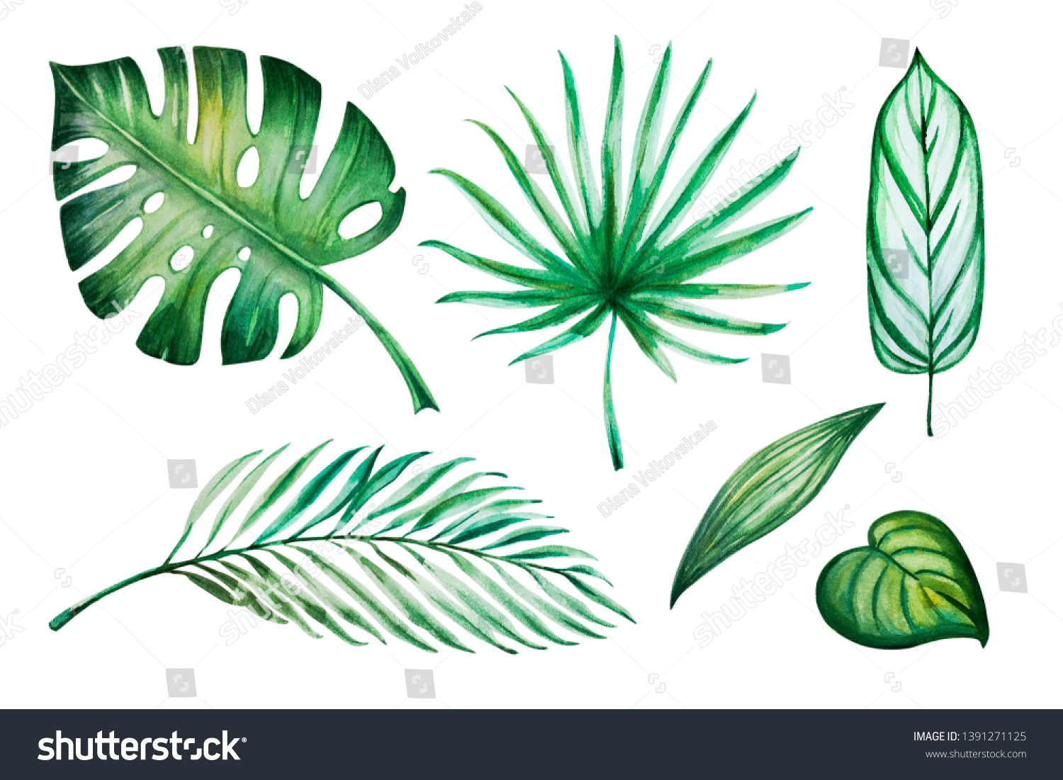 Beautiful Set Tropical Leaves Monstera Palm Stock Illustration 1391271125 Tropical flowers and leaves seamless pattern. https www shutterstock com image illustration beautiful set tropical leaves monstera palm 1391271125