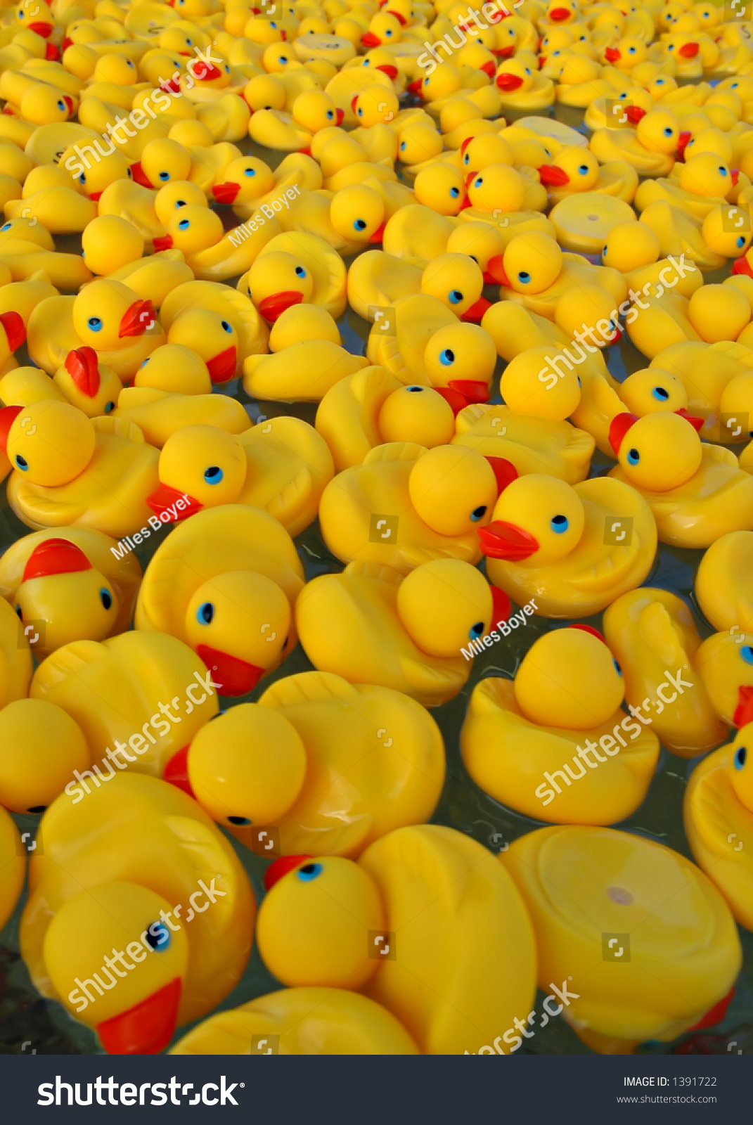 Many Yellow Rubber Ducks Floating Water Stock Photo (Royalty Free ...