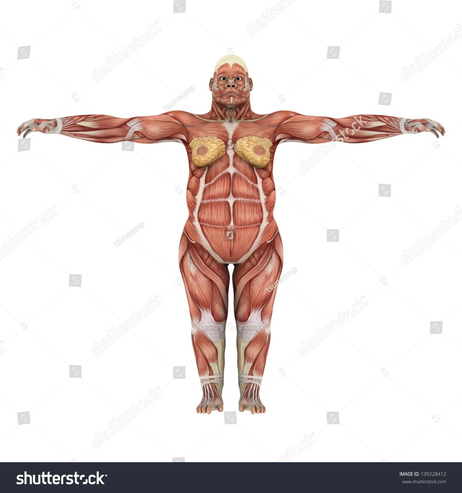 Gorilla Stock Illustration 139228412 - Shutterstock