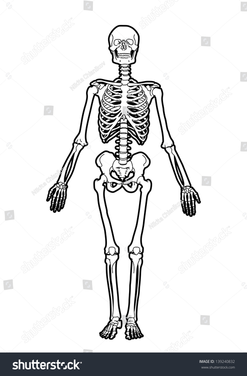 Outline Human Skeleton On White Background Stock Vector Illustration ...