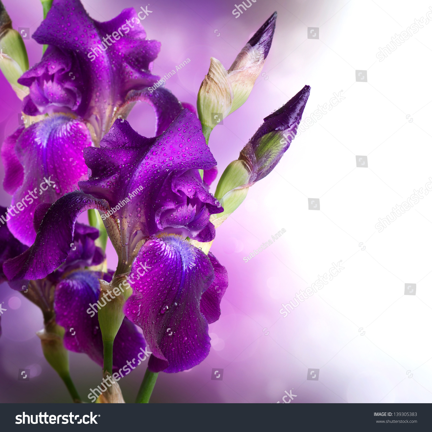 Iris Flowers Art Design Beautiful Violet Stock Photo Edit Now