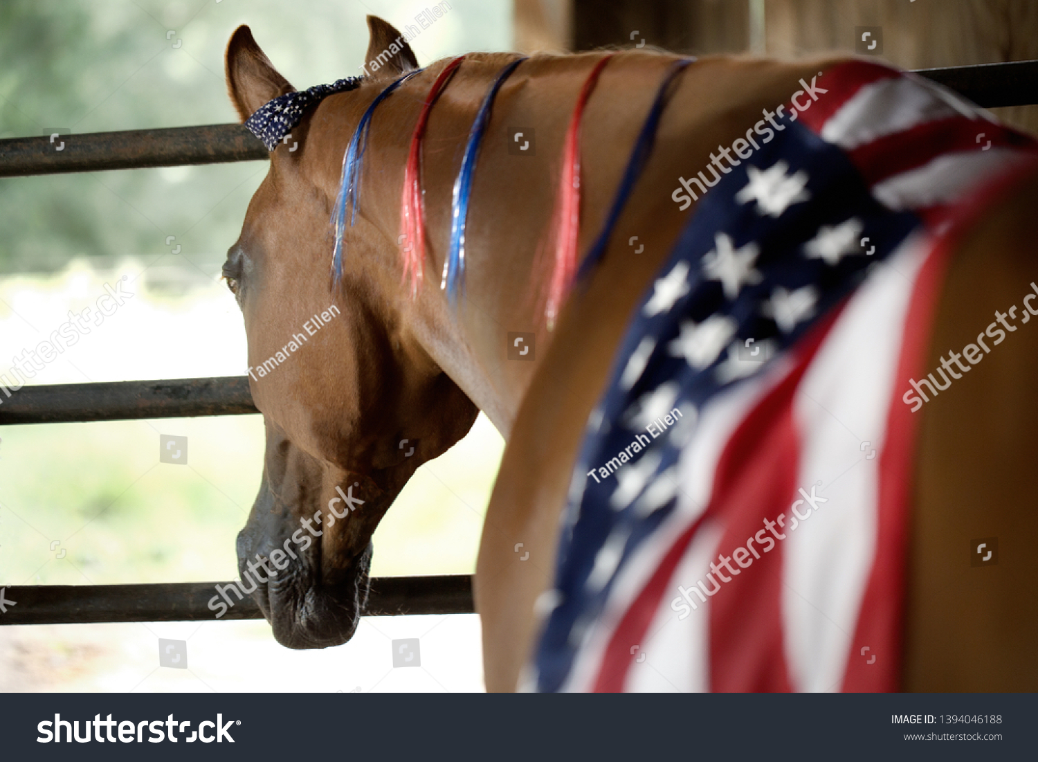 Horse Adorning American Flag Remembrance Memorial Stock Photo Edit Now 1394046188