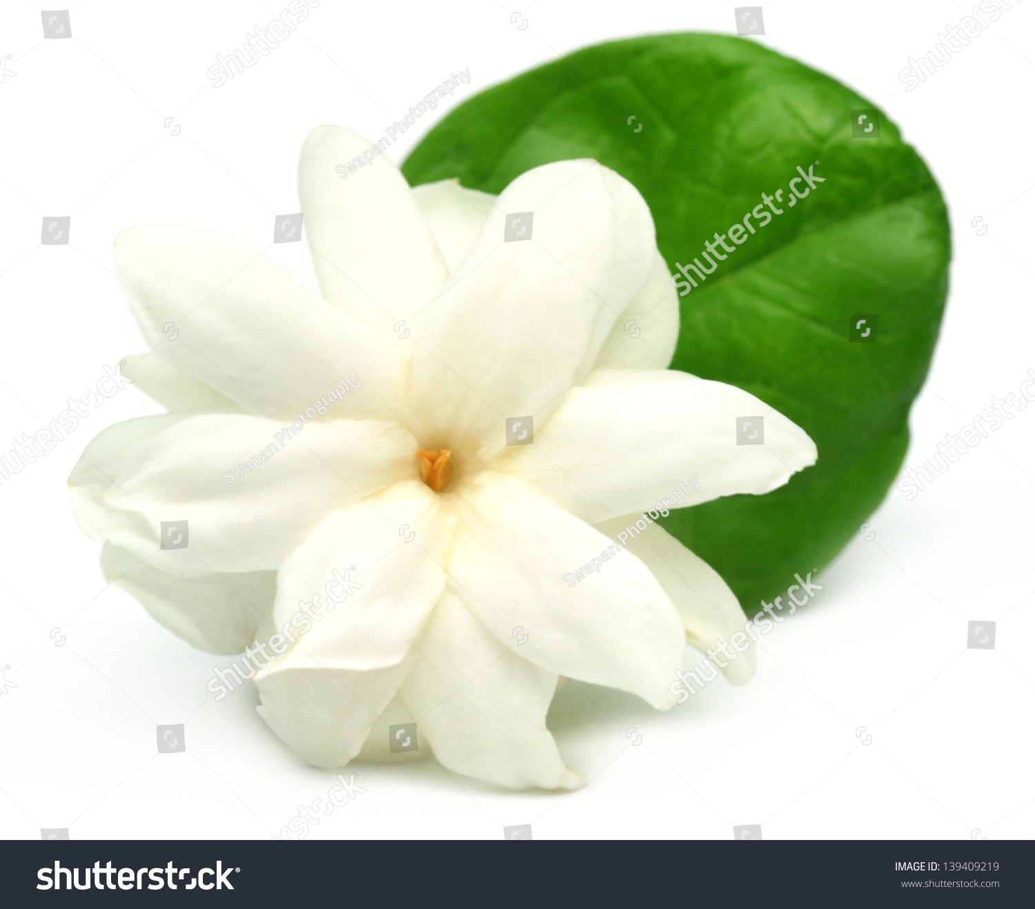 Jasmine Flower Over White Background Stock Photo 139409219