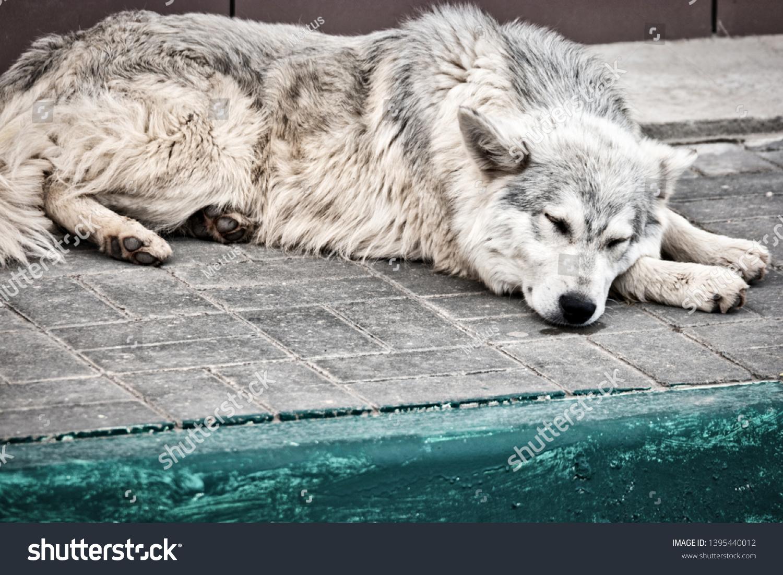 Stray dog sleeping outside on pavement alone, pet needs adoption