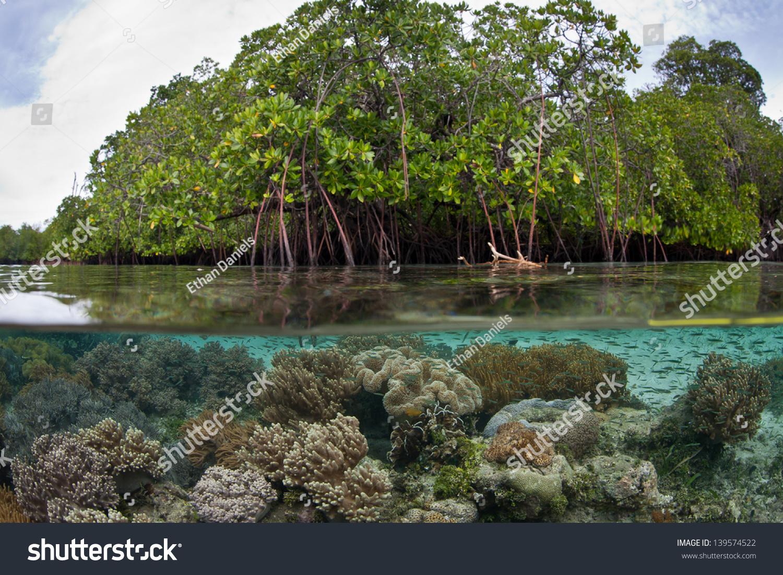 mangrove essay Mangroves essays: over 180,000 mangroves essays, mangroves term papers, mangroves research paper, book reports 184 990 essays, term and research papers available for.