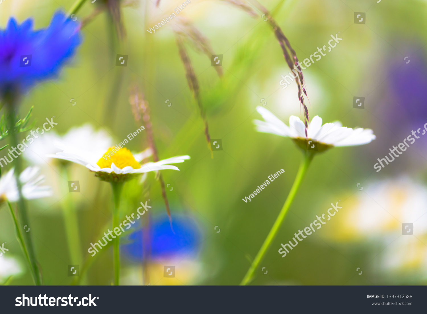 Summer flowers on the meadow. Wildflower meadow, flower meadow, wildflowers #1397312588