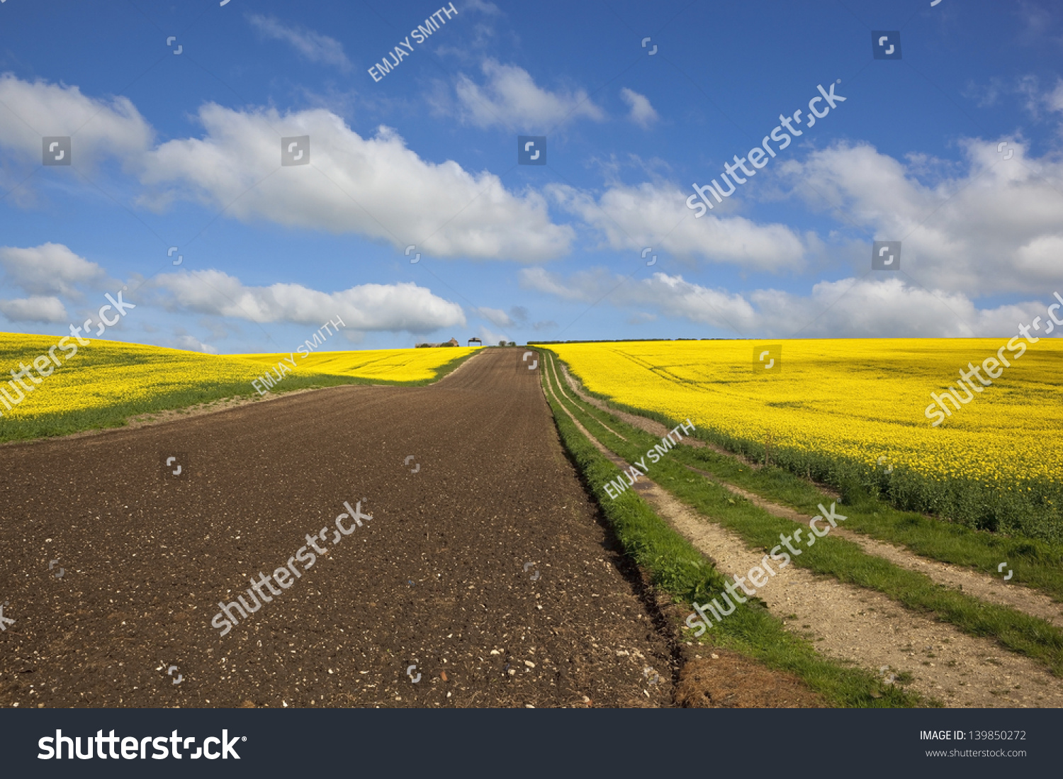 Surrounded By Canoloa Feilds Quotes: A Farm Track Leading Up To Farm Buildings Surrounded By