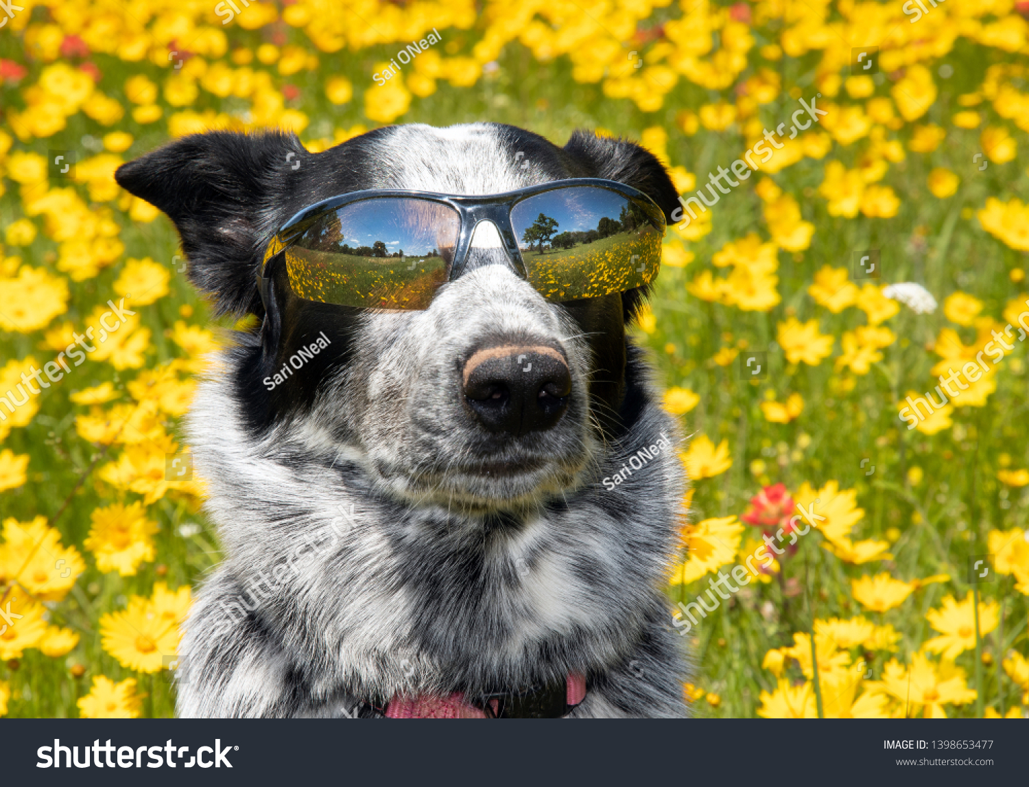 stock-photo-cool-black-and-white-dog-wea