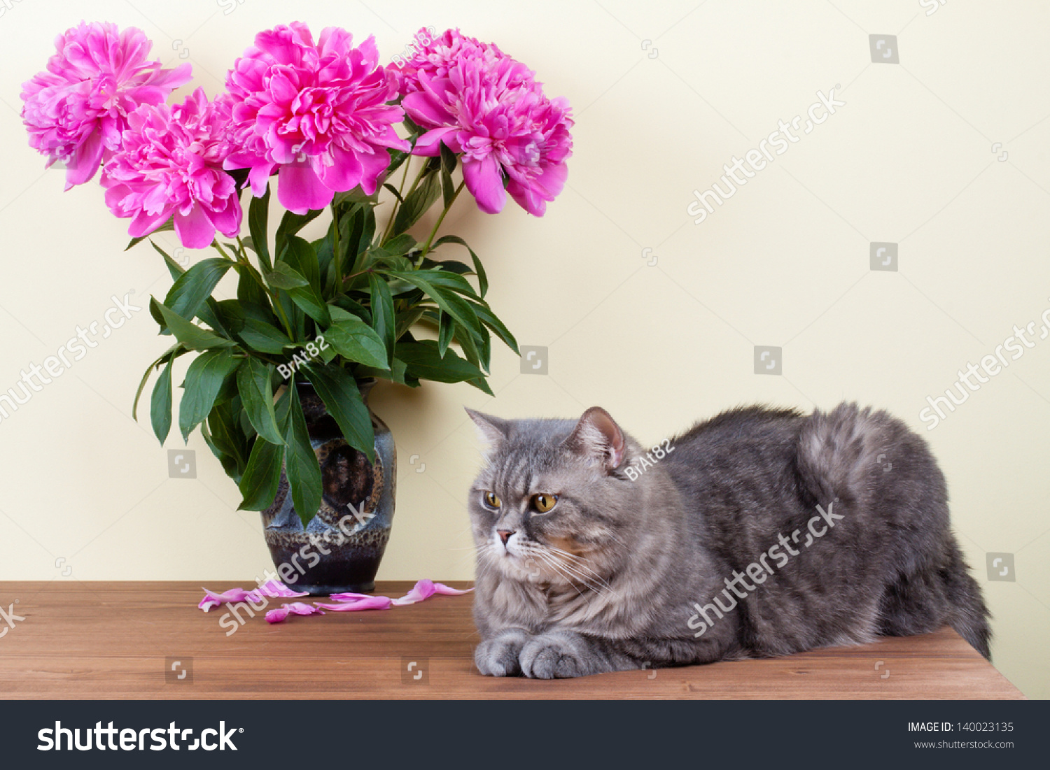 Cat Flowers Bouquet Vase On Wooden Stock Photo (Download Now ...