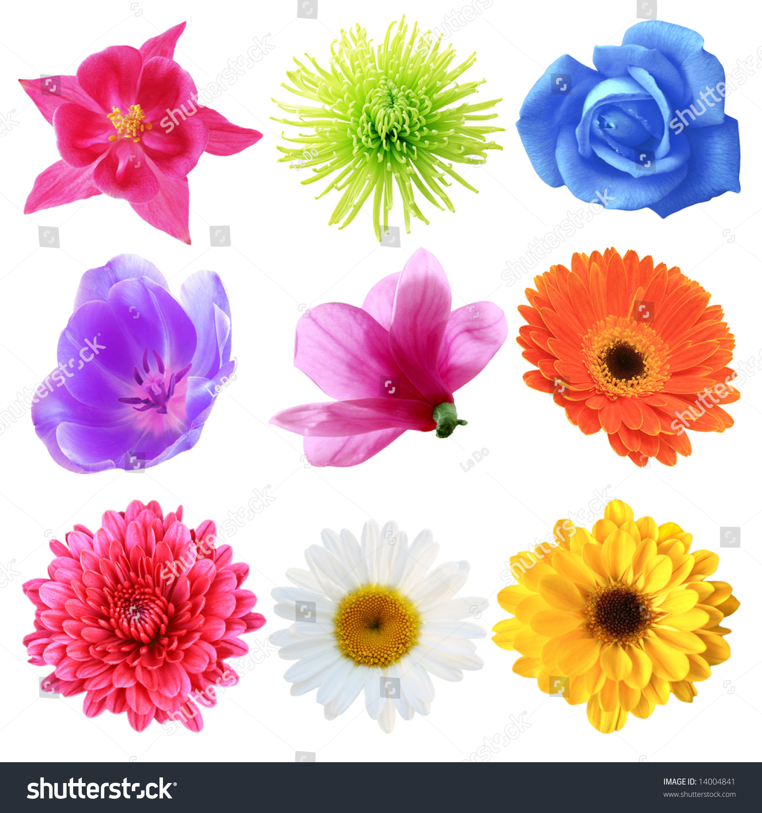 set flowers different shapes color stock photo   shutterstock, Natural flower