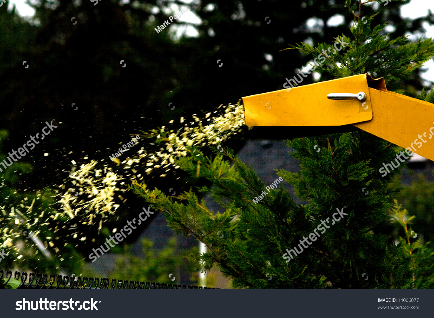Dirty Wood Chips ~ Wood chipper action captures stock photo