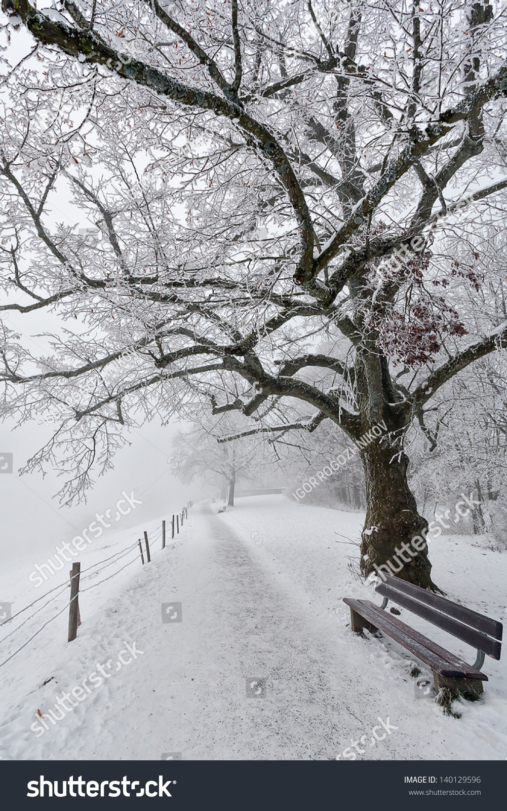 city park of st gallen in a foggy winter day stock photo 140129596 shutterstock. Black Bedroom Furniture Sets. Home Design Ideas