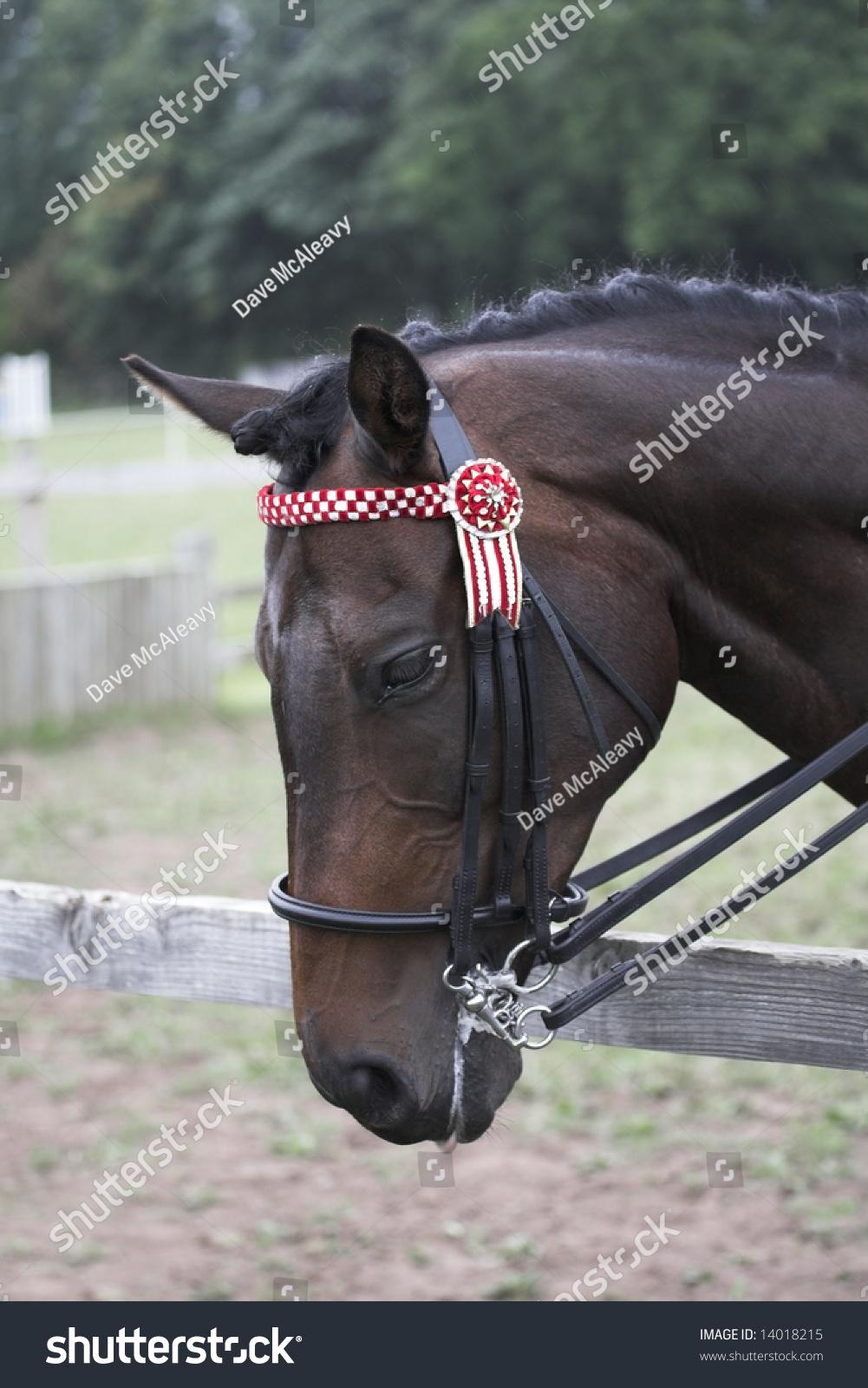 Dressage horse head