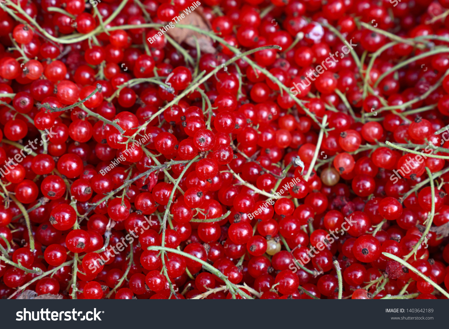 Close up heap of fresh redcurrant berries on retail display of farmers market, elevated high angle view #1403642189