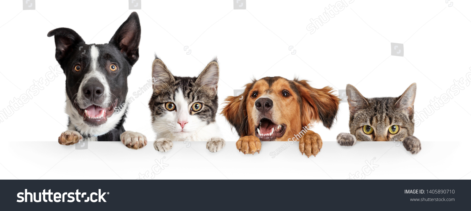 Funny happy dogs and cats peeking over blank white web banner or social media cover with paws hanging over #1405890710