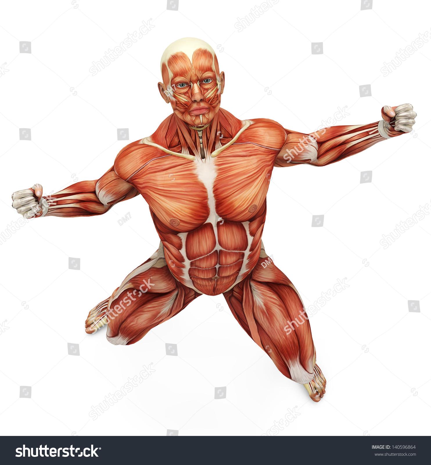Muscle Man Strong Pose Bird Eye Stock Illustration 140596864 ...