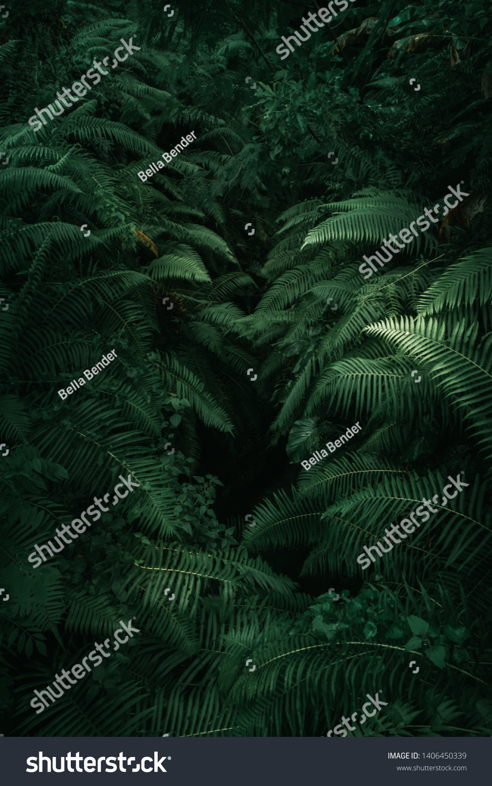 Ferns in the forest, Bali. Beautiful ferns leaves green foliage. Close up of beautiful growing ferns in the forest. Natural floral fern background in sunlight.  #1406450339