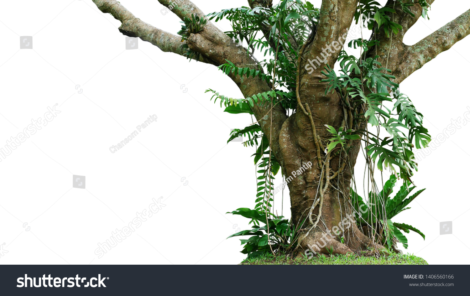 Jungle tree trunk with climbing Monstera (Monstera deliciosa), bird's nest fern, philodendron and forest orchid green leaves tropical foliage plants isolated on white background with clipping path. #1406560166