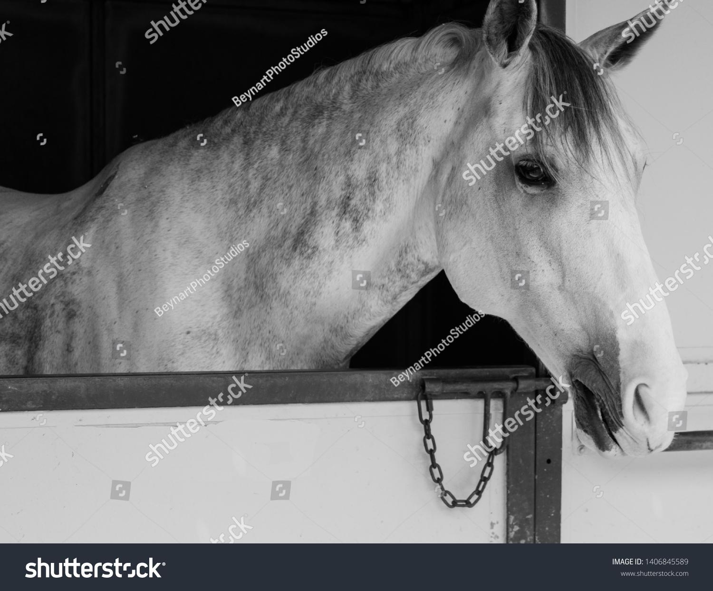 Horse Head Shot Portraits Profile Stock Photo Edit Now 1406845589