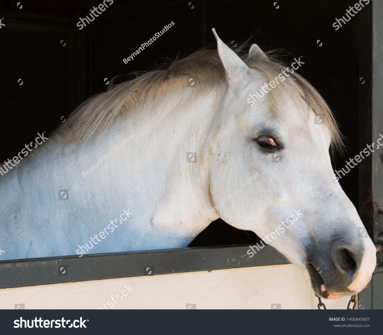Horse Head Shot Portraits Profile Stock Photo Edit Now 1406845607