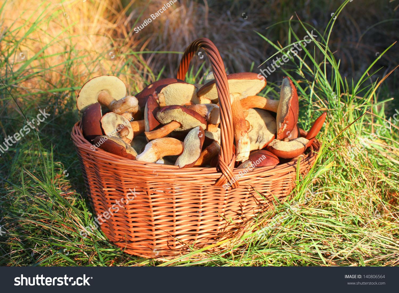 Фото осенние грибы в корзинке 2