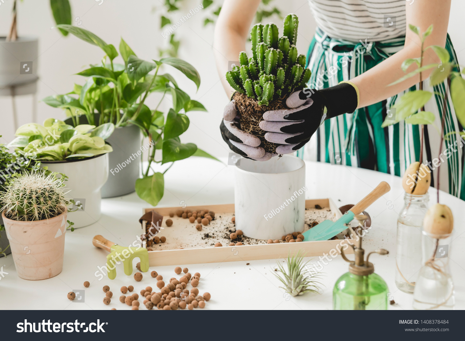 Woman gardeners  transplanting cacti in ceramic pots on the white wooden table. Concept of home garden. Spring time. Stylish interior with a lot of plants. Taking care of home plants. Template. #1408378484