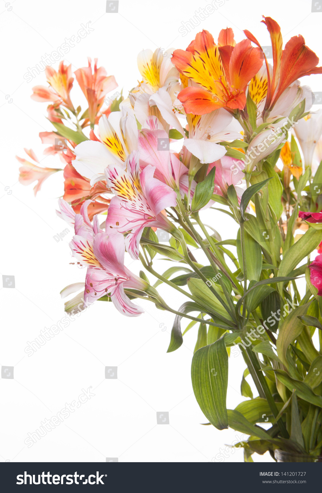 A Bunch Of Wonderful Alstroemeria Flowers Ez Canvas