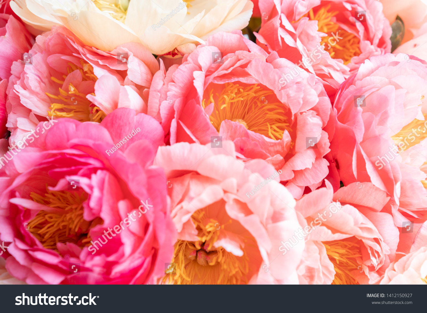 Floral Carpet Wallpaper Background Coral Peonies Stock Photo Edit
