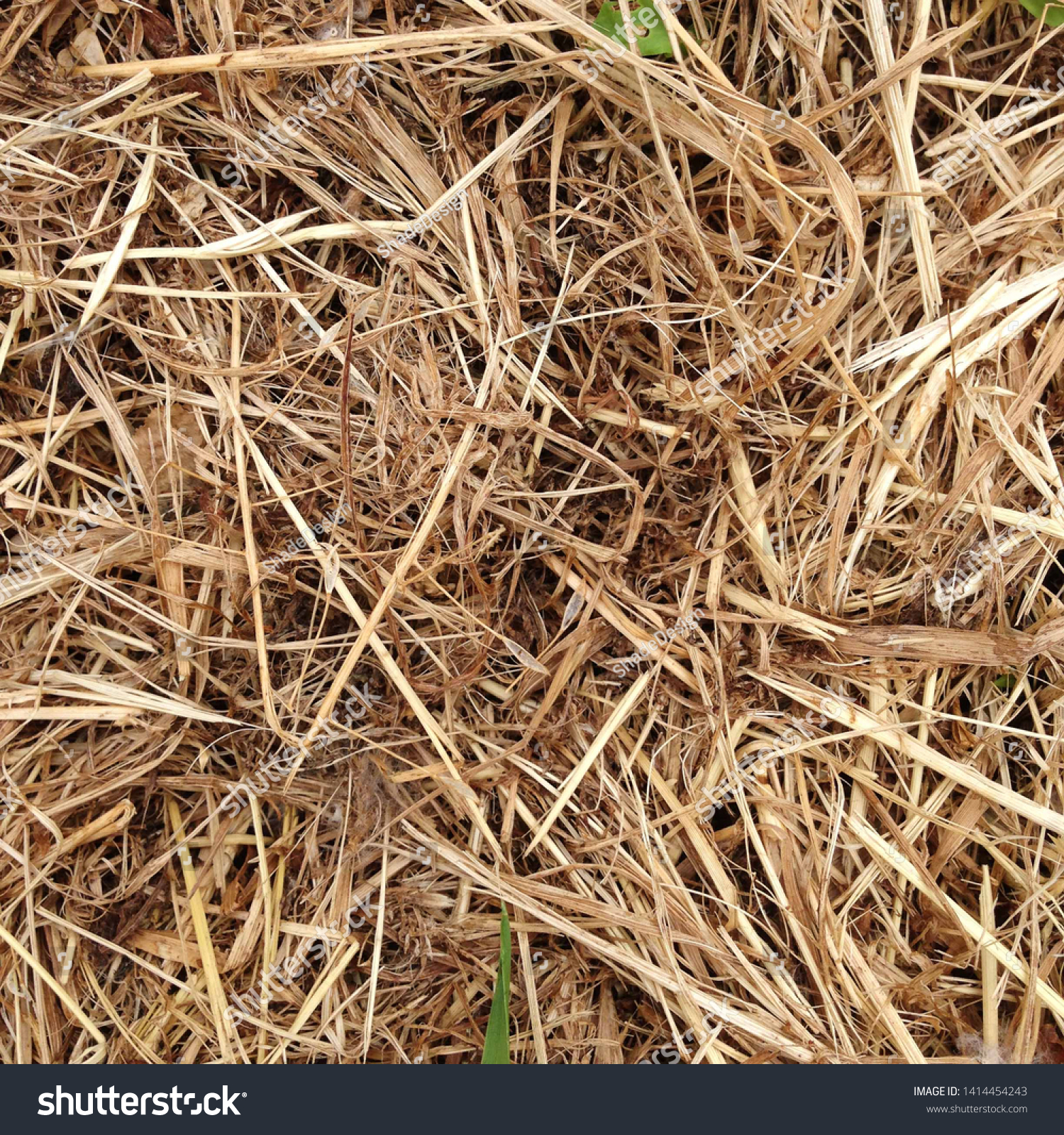 Macro photo nature dry hay. Texture background dry Wheat Straw.