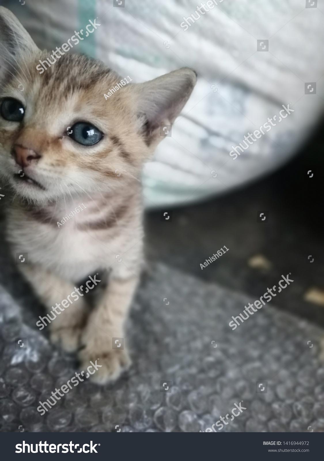 Sweet Cute Tabby Cat Baby Kitten Animals Wildlife Stock Image 1416944972