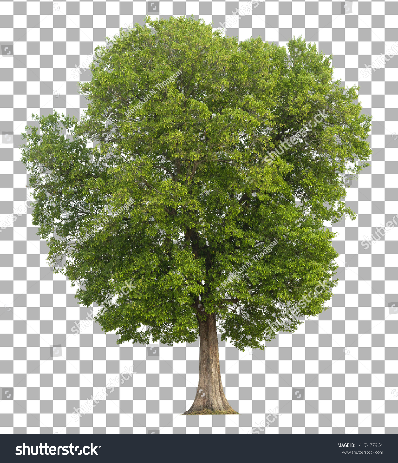Tree isolated on transparent background.  #1417477964