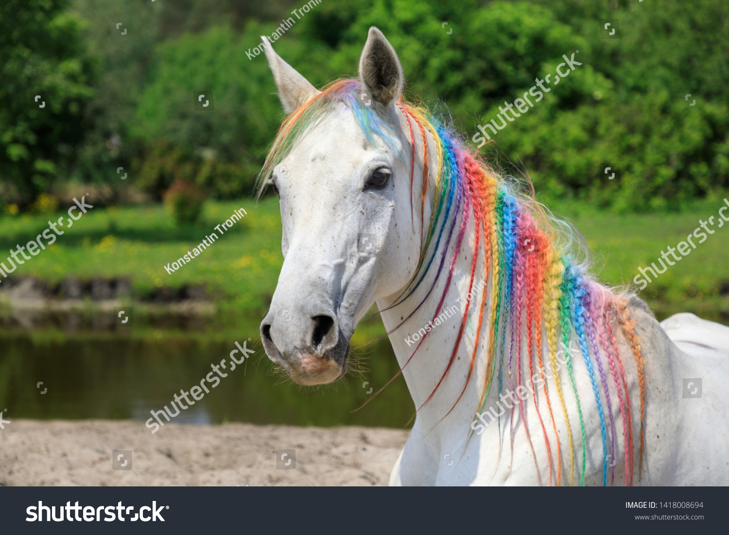 Arabian Horse Painted Rainbow Colors Outdoors Stock Photo Edit Now 1418008694