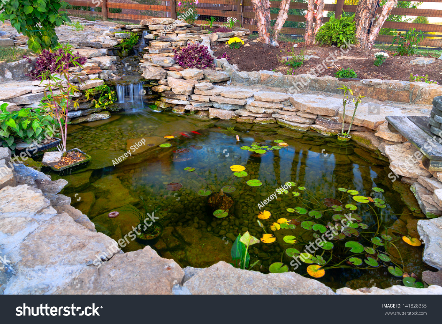 Decorative Koi Pond Garden Stock Photo 141828355