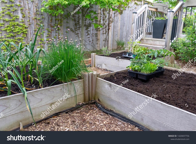 Raised Garden Beds Minimize Bending Allow Stock Photo Edit Now