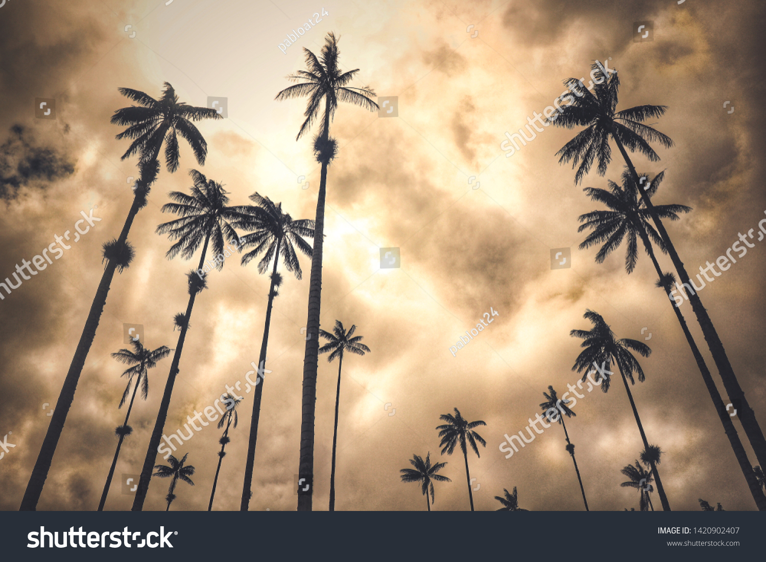 Palm Trees Wallpaper Los Angeles California Backgrounds Textures