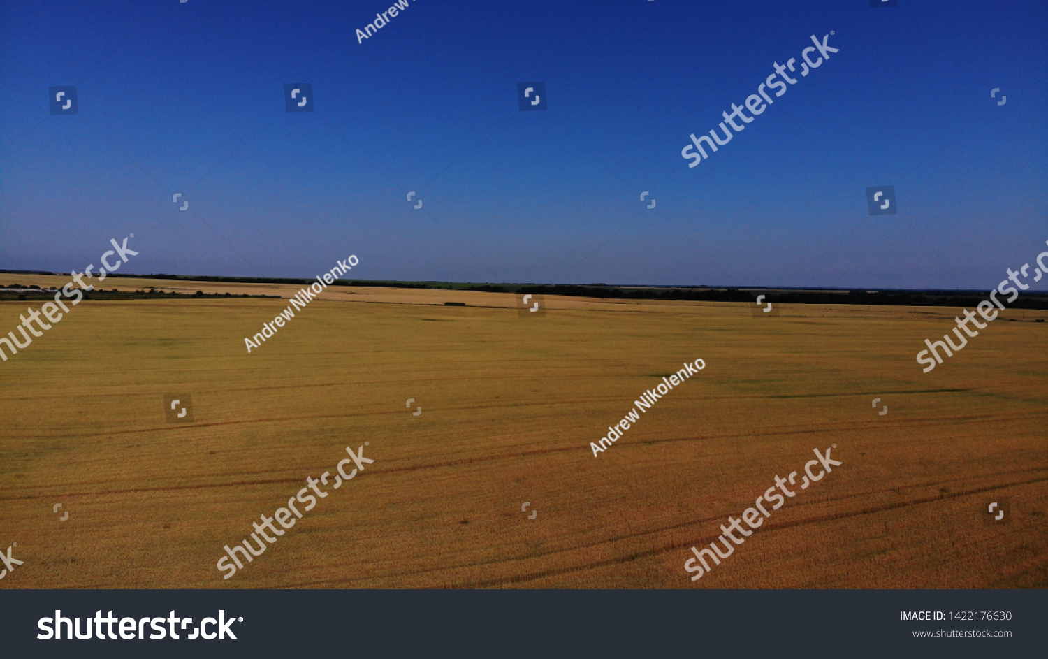 Aerial view of the wheat fields. Wheat fields from a height. Top down view of the wheat fields. Topdown view of the wheat fields. #1422176630