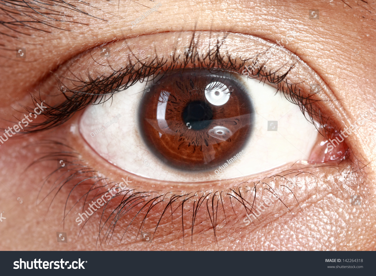 Close Picture Brown Eyes Young Man Stock Photo 142264318 - Shutterstock