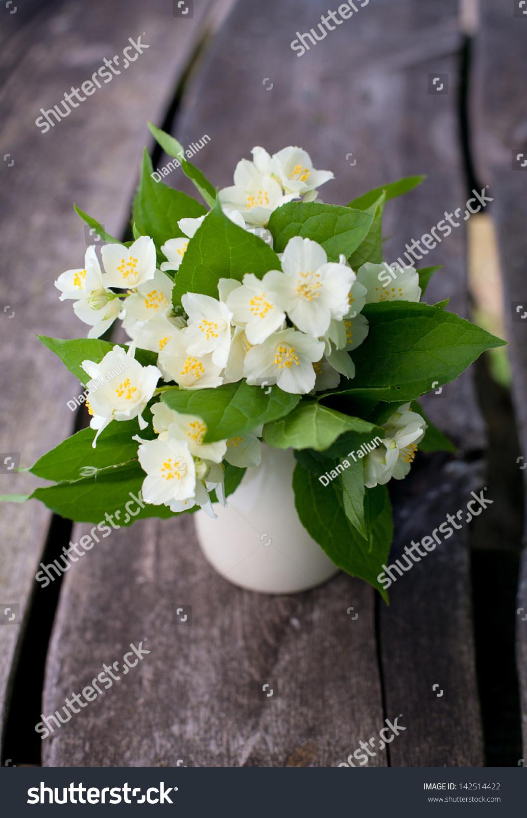 Bunch Jasmine Flowers On Wooden Garden Stock Photo Royalty Free