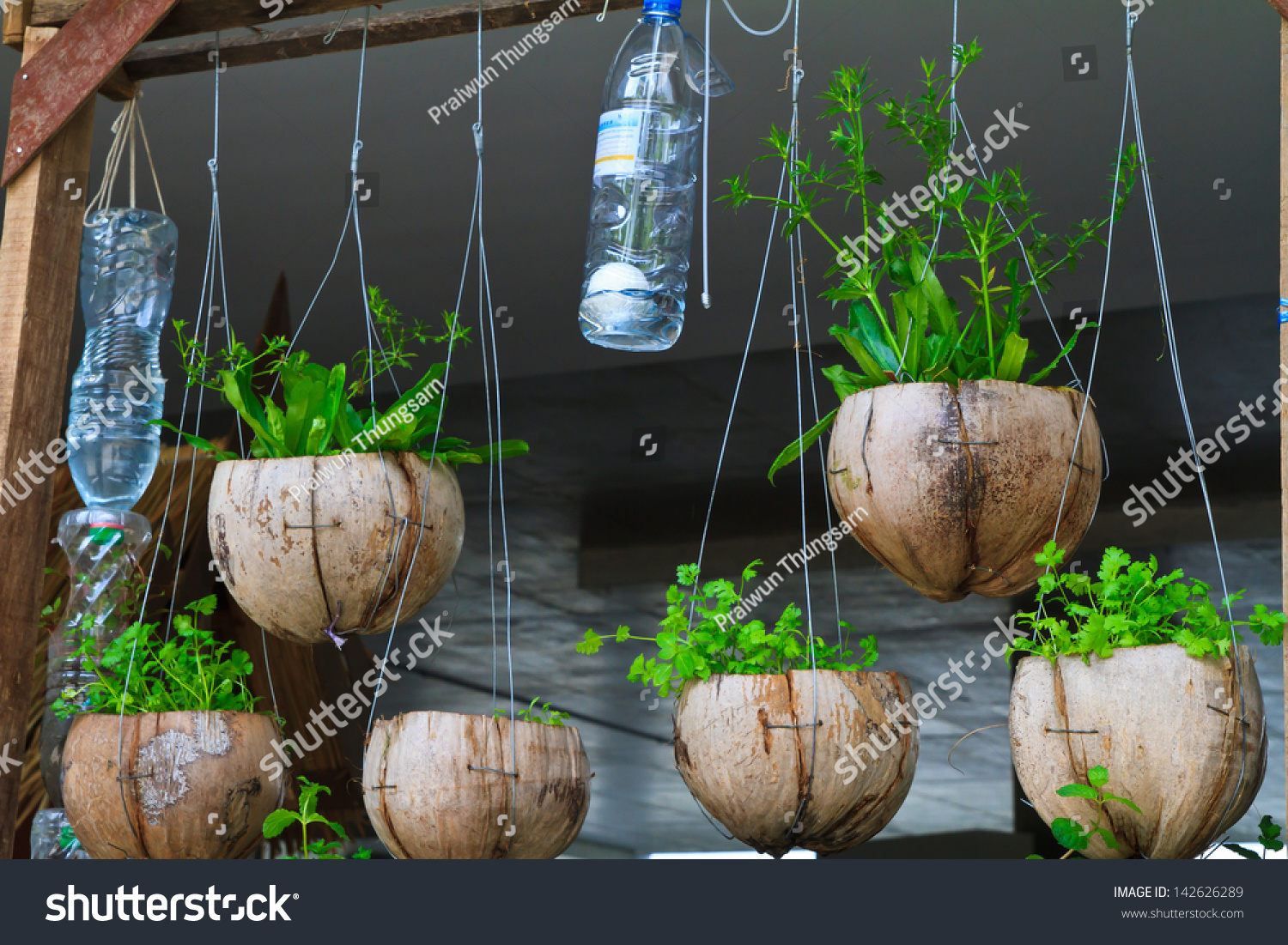 Vegetable Planting Pot Made Waste Material Stock Photo 142626289 ...