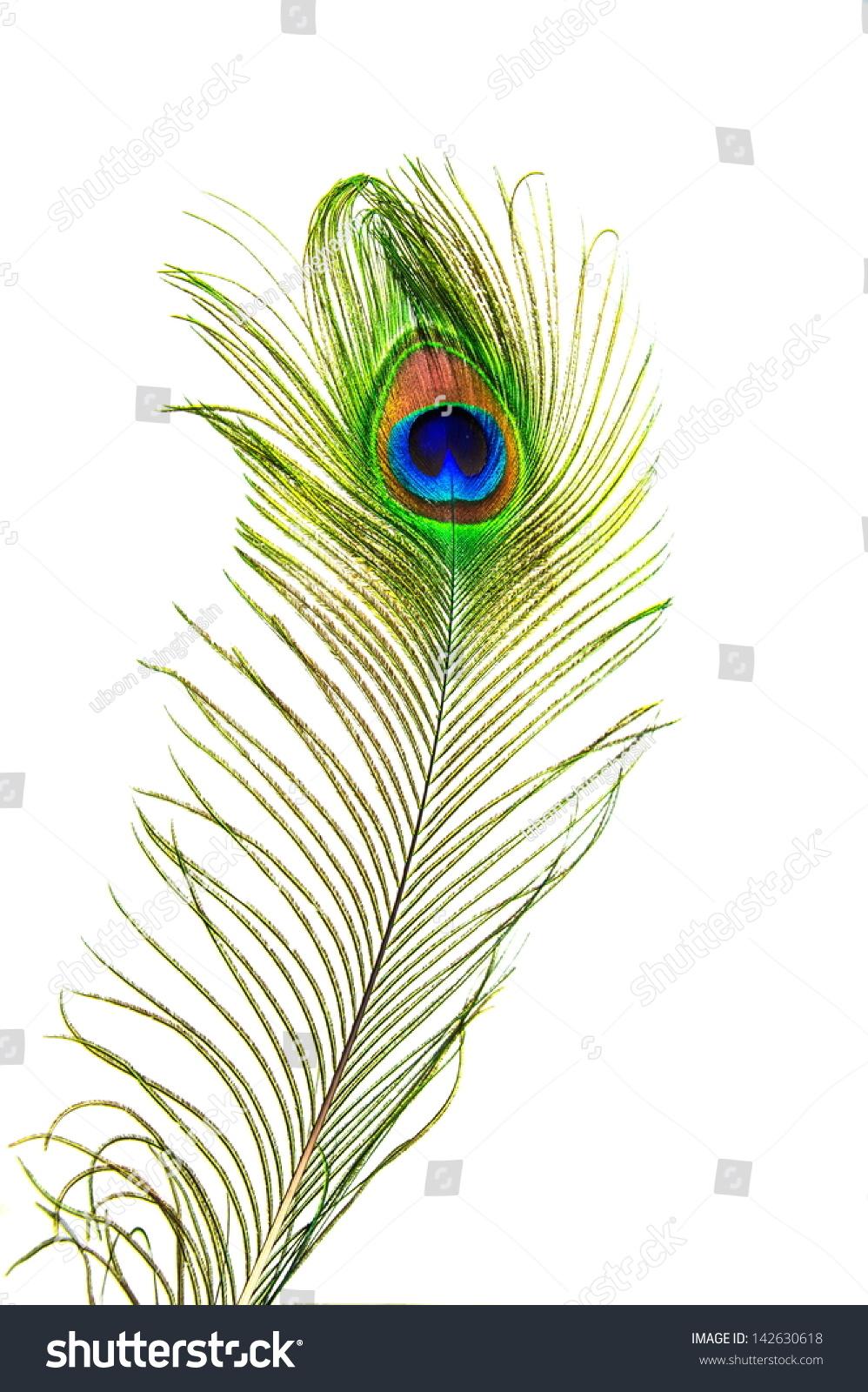 Beautiful peacock feathers stock photo 142630618 shutterstock - Beautiful peacock feather ...