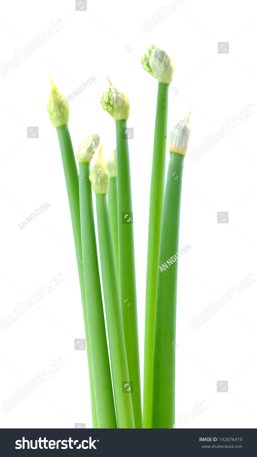 Allium Spring Onion Flowers Isolated On Stock Photo Edit Now