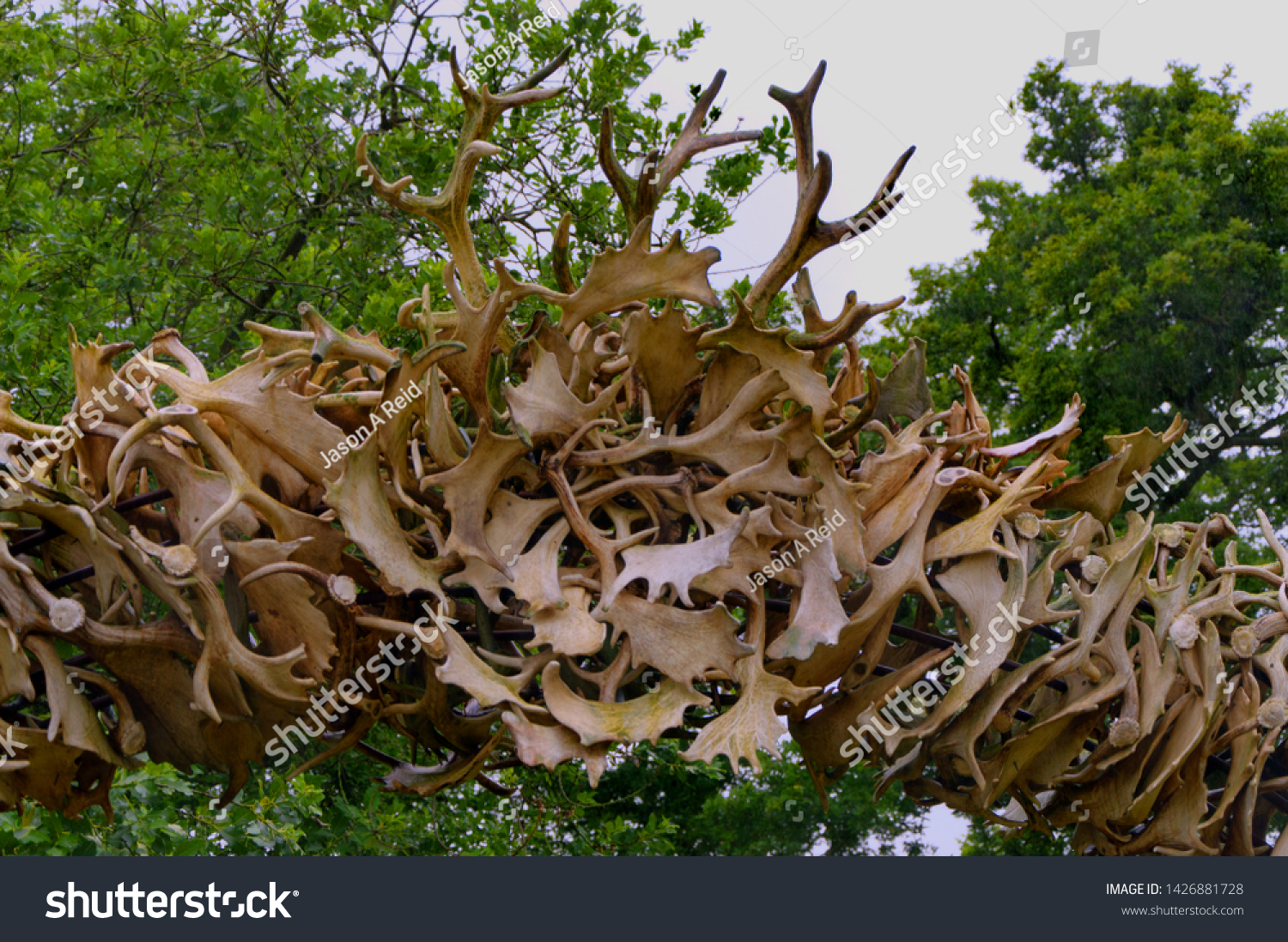 collection of antlers formed in an arch #1426881728